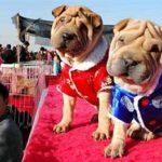 Cina, rivoluzione a tavola: basta cani e gatti nel menu