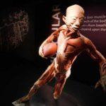 Denuncia dell'uso dei cadaveri dei condannati a morte cinesi al Congresso USA