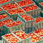 Concentrato di pomodoro cinese spacciato per Made in Italy
