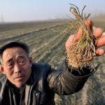 Pechino nella morsa di una siccità mai vista