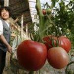 Scarsa qualità e lavoro forzato dietro alcuni cibi cinesi