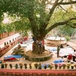 Card Gracias: Solidarietà e sostegno ai buddisti dopo l'attacco all'albero sacro