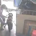"""Cina. Cani e gatti, torturati: """"grandi camion, piccole gabbie"""""""