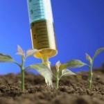 Gli OGM provenienti dalla Cina contaminano la catena alimentare