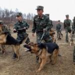 """COREA DEL NORD:  Lo zio di Kim Jong-un """"è stato fucilato, non sbranato dai cani"""""""