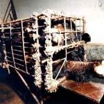 Bile di orso tibetano, l'industria della crudeltà