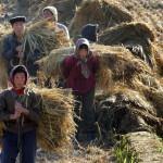 Cambiamento nelle politiche alimentari cinesi condiziona l'economia americana