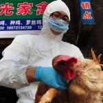 Allarme in Cina: primo morto al mondo per aver contratto il virus H5N6, una nuova variante di influenza aviaria.