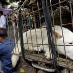 Cina, al via il festival della carne di cane