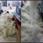 Cina, dentro la fabbrica di noodle: condizioni igieniche da incubo
