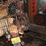 Torna il Festival della carne di cane, a Yulin le proteste non servono a nulla