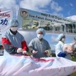 Resoconto fa luce sull'espianto di organi dai praticanti del Falun Gong in Cina