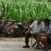 Cina-Rapida crescita del tasso di suicidi di anziani nelle campagne de...