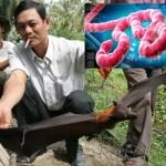 Compagnie Occidentali e Cinesi hanno potenziato  la diffusione. Ebola, che cosa è, quali sono i sintomi, quali farmaci usare (Video)