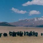 """TIBET: """" I nomadi tibetani obbligati a lasciare il pascoli entro il 2014"""