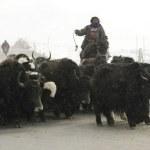 """TIBET: """"Nomadi tibetani si rifiutano di lasciare le loro case e i pascoli, le autorità cinesi confiscano i loro documenti"""""""