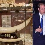 Il principe William contro la Cina per la strage degli elefanti