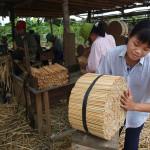 La foresta cinese paga a caro prezzo la produzione delle bacchette tradizionali usa e getta (Video)