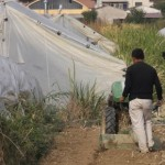 Coldiretti preoccupata per l'espansione degli agricoltori cinesi