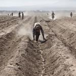 Land grabbing, l'accaparramento della terra nei Paesi poveri. Anche gli italiani fanno land grabbing.