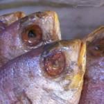 Bergamo, sequestrato un quintale di cibo avariato in supermercato cinese