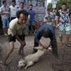 Cina. Torturano i cani per costringere gli animalisti a comprarli
