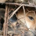 Yulin Dog Meat Festival, fermiamo la sagra della crudeltà in Cina. Presidio davanti Ambasciata Cinese Roma