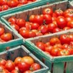 Pomodoro cinese nei kit per la Germania, la Montali accusata di frode