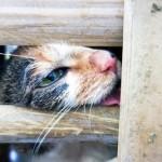 Cina, attivisti salvano oltre mille gatti destinati alla macellazione