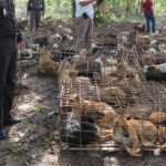 """La denuncia sul commercio di pellicce di cani in Cina: """"maltrattati in gabbia e sgozzati"""" [Video]"""