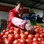Pomodori cinesi in Italia: non comprate più questo prodotto estero