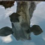 Cina: Pechino pronta a costruire il più grande impianto di clonazione animale al mondo