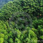 La Cina saccheggia le foreste d'Africa