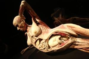 051113 - presentazione mostra Body Worlds - dottor Gunther Von Hagens - esposizione di veri corpi cadaveri plastificati plastinati plastinazione - foto Nucci/Benvenuti - presentazione mostra body worlds - fotografo: BENVENUTI