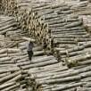 Il legno illegale è un business come le armi: la Cina il principale es...