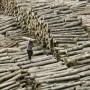 legno-illegale-3-def