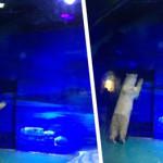 Senza sole e chiusi tra quattro muri: animali dello zoo in Cina vivono così [Video]
