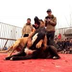 La Cina e i diritti degli animali: il tira e molla di Pechino
