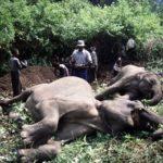 Animal grabbing: la Cina spoglia l'Africa uccidendo i suoi animali