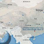 """Cina: migliaia di tigri lasciate morire per produrre  """"liquore"""""""