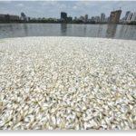 Cina : disastro ambientale nel Mar Cinese Meridionale, uccide pesci e coralli per costruire basi militari. Moria di pesci anche nell'isola di Hainan. [Video]