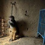 Cina, i circhi della sofferenza [Video]