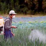 Il grano per il pane più vantaggioso comprarlo in Cina, piuttosto che dietro casa, a discapito di sicurezza e di qualità