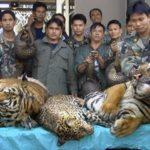 Cina: acquirente principale di specie animali protette in via di estinzione per scopi commerciali