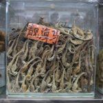 """Milioni di cavallucci marini stanno sparendo, uccisi per la """"medicina"""" cinese"""