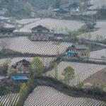 Cina, la plastica contaminante copre il 12% dei terreni agricoli