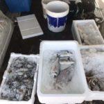 Pesce insieme ai secchi di vernice: furgone sequestrato