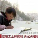CINA-Shaanxi: bambina di 12 anni vende i suoi capelli per comprare uno smartphone e contattare la madre migrante