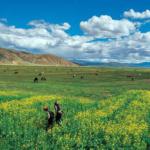 Tibet: le autorità cinesi si sono appropriate con la forza della terra di contadini tibetani