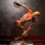 """La mostra """"Real Bodies"""" è accusata di usare cadaveri di prigionieri politici cinesi giustiziati"""